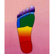 "Color Coordinated Body Parts, Laminated 11""x17"" Wall Chart, Feet"